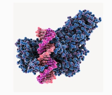 A protein-machine grabbing onto pink DNA